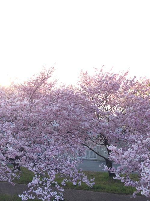 2014-04-11 16.55.47.jpgのサムネイル画像